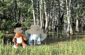 e & e wetlands