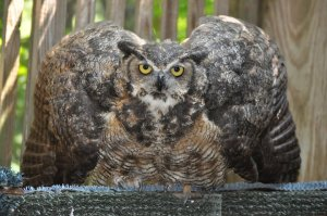 We just loved this owl!