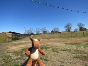 Edmond said this is one great places for horses!