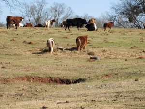 Check out some of the horses & ponies!