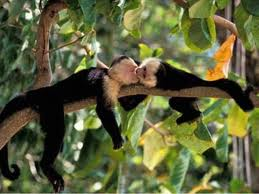 monkeyval
