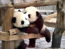 pandaval