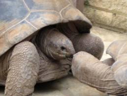 tortoiseval