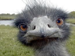 emus3