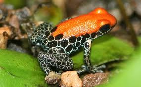 frog6