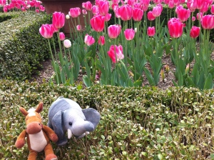 We stopped to check out the tulips!