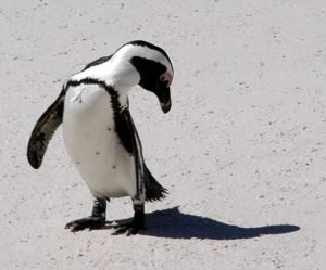 penguin8