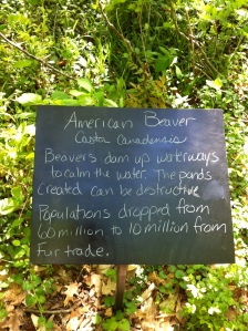 We didn't see the beavers :(....