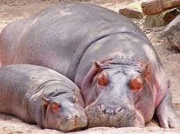 animal mom6