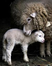 animal moms5