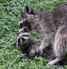 animal moms6