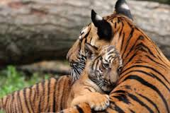 animal moms9