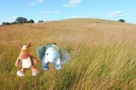 e e grasslands2