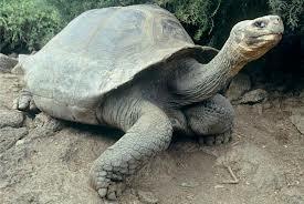 turtle8