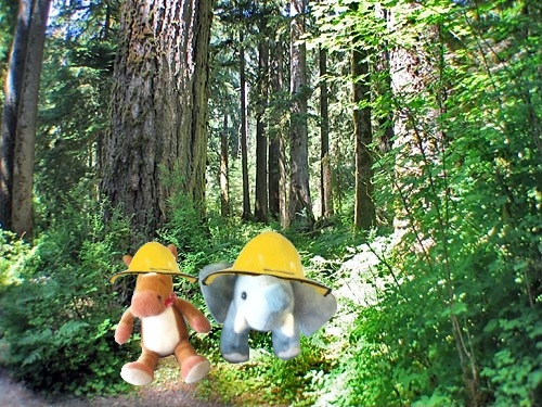Rainforests the adventures of ellie and edmond e e rainforest sciox Image collections
