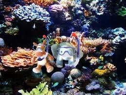 e & e snorkeling