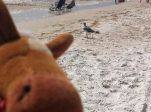 Edmond photo bombing a gull!