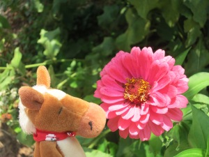 Edmond had to stop and smell the flowers!