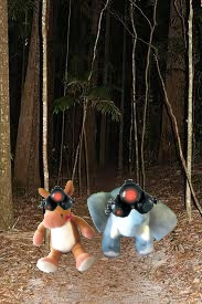 e & e night rainforest