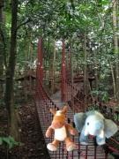 e & e rainforest2
