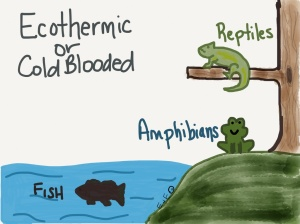 endothermic cartoon