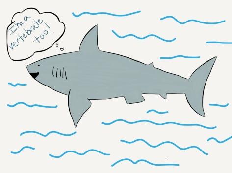 shark-vertebrate