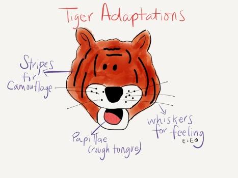 tiger adaptations
