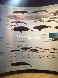 whales13