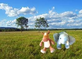 e e grasslands