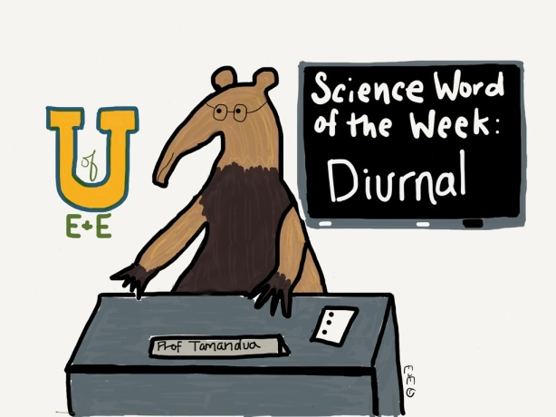 science word week diurnal