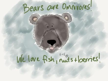 bear omnivore