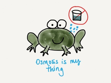 Frogs don't drink water- they absorb it through their skin!
