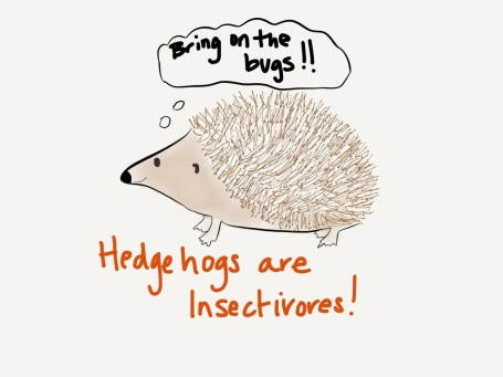 hedgehog swow