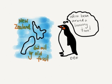 The oldest penguin fossil was found in New Zealand. It was 62 million years old.