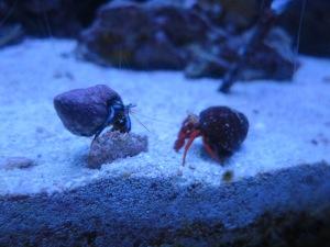 Hermit crabs!