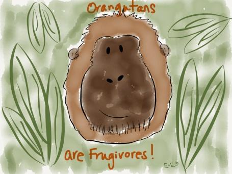 orangutan swow