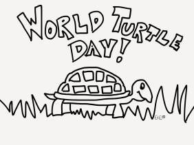 turtle day