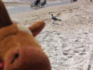 Edmond photo bombing a seagull