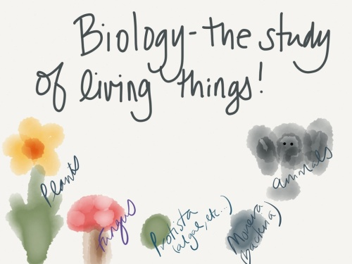 biology cartoon