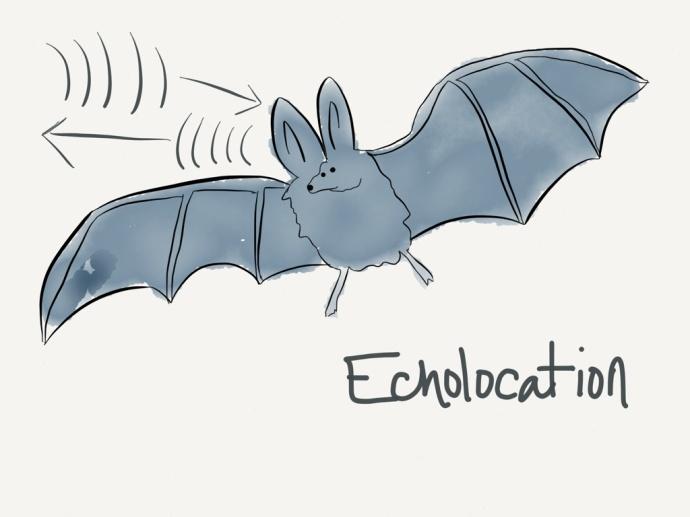 swow echolocation cartoon