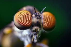 compound eye pic