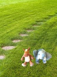 e e grass yard