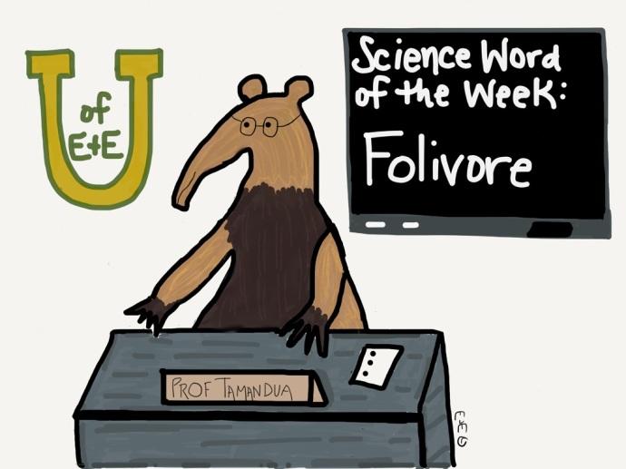 swow folivore