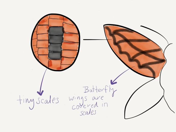 butterfly scales