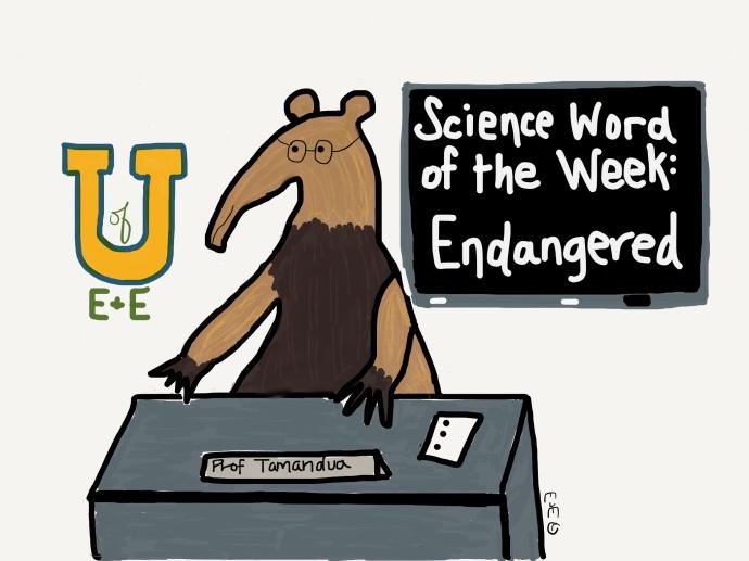 swow endangered