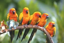 e e birds