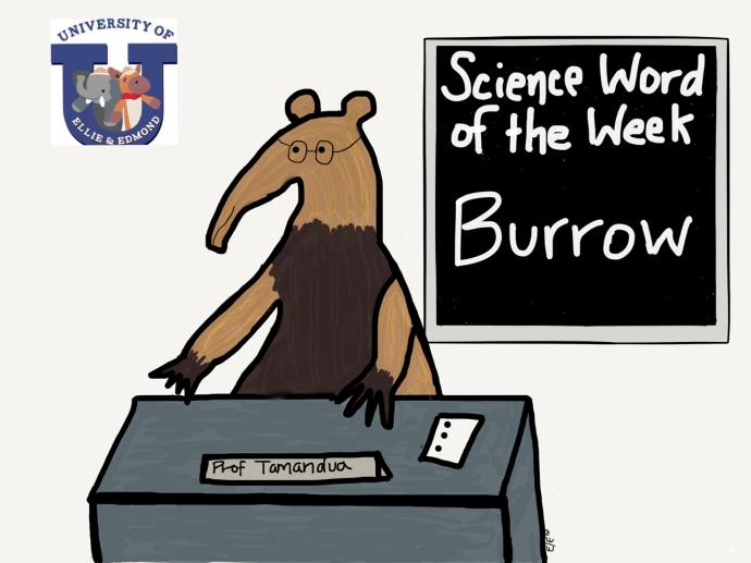 swow burrow