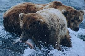 Bears are some of the most famous omnivores out there.