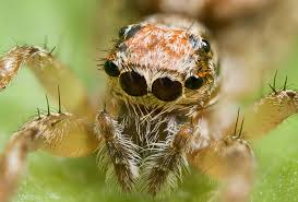 Spiders are carnivores. Their teeth inject venom in their prey. Some snakes also have this capability.