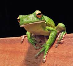Pesticides do no harm to frogs and other amphibians. True or False